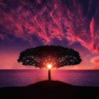 Body, Body's Ability To Heal Itself, Breathing Technique, Deep Breathing, Exercise, Genomics, Immune System, Meditation, Mind, Mind Body Spirit, Mind Body Spirit Connection, Neuroscience, Nutrition, Pain, Physical Health, Prayer, Psychology, Psychosomatic, Sleep, Soul, Spirit, Stress, Well Being, Yoga